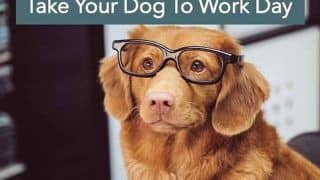National Take Your Dog to Work Day 2020: What This Day is All About And How it is Celebrated