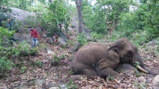 What's Happening? Another Elephant Found Dead in Odisha With Bullet Mark On Body