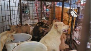 No Lessons Learnt? Despite Covid-19, The Controversial Yulin Dog Meat Festival Kicks Off in China