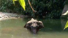 Pregnant Elephant Death Case: गर्भवती हथिनी की हत्या में एक गिरफ्तारी, जानें अपडेट