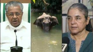 Kerala CM Pinarayi Vijayan Vows 'Strict Action' Against Culprit After Pregnant Elephant Dies on Being Fed Cracker-Stuffed Pineapple in Malappuram