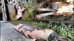 World Environment Day: After Death of Kerala Elephant, Carcass of Dolphin in Assam River Due to Oil Spill Sparks Fury