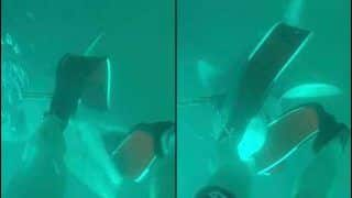 18-Year-Old Shares Chilling Pictures of Bull Shark Attacking Him While he Was Out Diving, Netizens Call it 'Close Call'