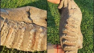 5 Million Years Old 'Habitat' of Giant Elephants Discovered by UP Officials While Scouting For New Tiger Reserve