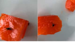 Housefly Halwa: Hyderabad Man Shares Pic of Insect In Halwa He Ordered Online, Swiggy Apologises