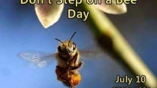Don't Step on a Bee Day 2020: Why This Day is an Important Reminder to All