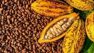 World Chocolate Day 2020: Read About The Maya Mythology That Surrounds Our Favourite Food