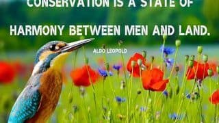 World Nature Conservation Day 2020: Quotes And Sayings That Encourage us to Protect The Environment
