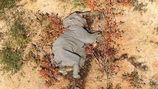Conservation Disaster   : Over 350 Elephants Found Dead In Botswana Since May & No One Knows Why