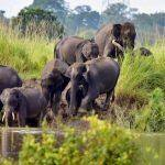 Vulnerable Wildlife at Risk As 116 Animals Including 11 Rhinos Dead in Assam's Flooded Kaziranga Park