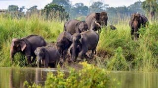 Vulnerable Wildlife at Risk As 116 Animals Including 11 Rhinos Dead in Assam's Flooded Kaziranga Park