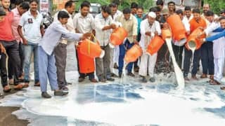 The Irony! Maharashtra Farmers Spill Gallons of Milk on Streets to Protest Against Low Prices, Netizens Appalled by Food Waste