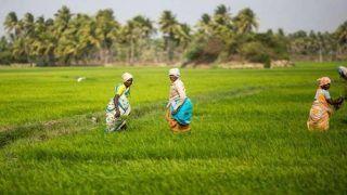 Pradhan Mantri Fasal Bima Yojana किसानों के लिए है बहुत जरूरी,  इस तारीख से पहले करा लें नामंकन, होंगे कई बड़े फायदे