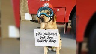 National Pet Fire Safety Day 2020: History And Significance of The Day