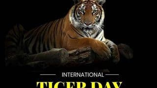 International Tiger Day 2020: Why The day is Important And How it Came Into Being