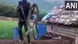तमिलनाडुः 15 फीट विशालकाय किंग कोबरा देख उड़े लोगों के होश, कुछ ऐसे पाया छुटकारा