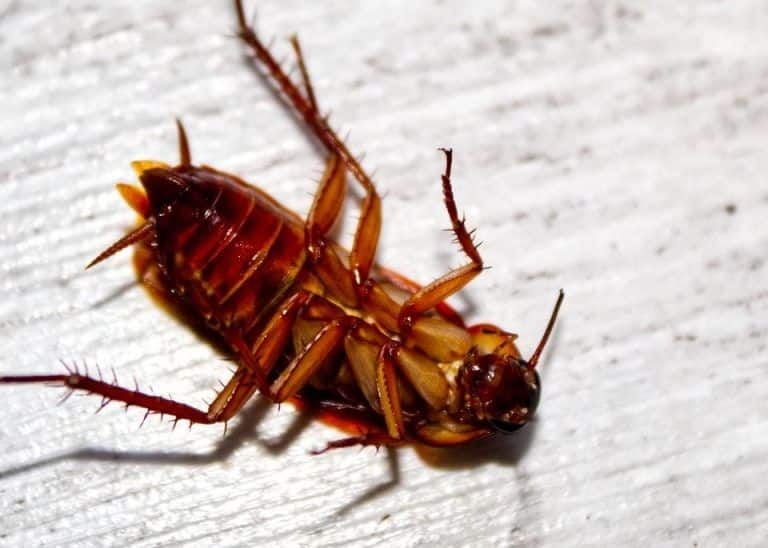 Eww! Doctor Pulls Live Cockroach Out of Chinese Woman's Ear, It Had Crawled in While She Was Asleep