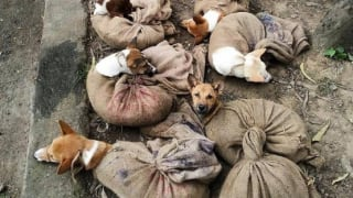 Dogs Illegally Being Transported to Nagaland to Be Sold As Meat, Enraged Twitter Says 'Stop This Brutality'
