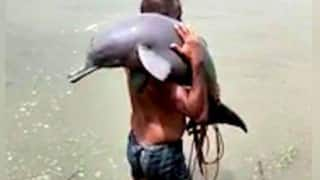 Fisherman Accidentally Catches Endangered Ganges River Dolphin in Bihar's Purnia, Carries it to Safety