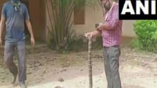 15-Feet-Long King Cobra Rescued From Odisha's Ganjam, Released in Forest