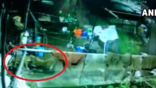 Watch | Leopard Enters House in Uttarakhand's Nainital & Kills Family Dog, Incident Caught on Camera