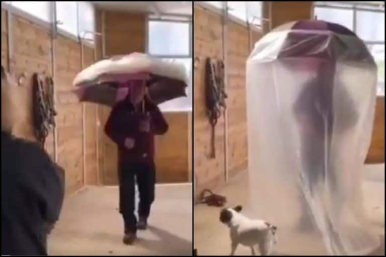 COVID Umbrella: Twitter Goes Gaga Over Viral Video of Man Walking Around With Latest Corona Invention