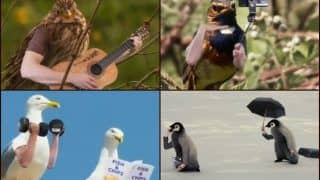'If Birds Had Arms': Edited Video of Birds With Hands Instead of Wings, Playing Guitar-Clicking Selfies, Leaves Internet in Splits | WATCH