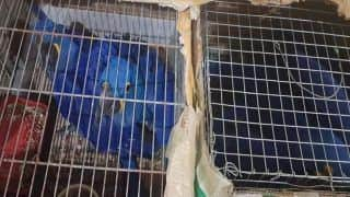Wildlife Smuggling of Exotic Species From Myanmar Seized in Assam by Forest Officials