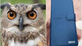 Wait, What? An Owl Apparently Dropped A Smartphone On Man's Terrace in Bengaluru, Twitter Asks 'Hogwarts Coming to Life in 2020?