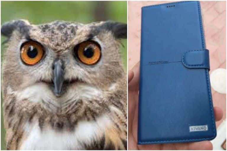 Wait, What? An Owl Apparently Dropped A Smartphone On Man   s Terrace in Bengaluru!