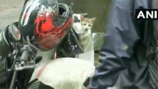 'Heart of Gold': Man Rescues Kitten Amid Heavy Mumbai Rains, Takes it Home | Watch Viral Video