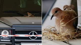 Dubai Crown Prince Stops Using His Mercedes After Birds Build Nest on it As He Didn't Want to Disturb Them | Watch