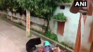 Odisha: कस्बे में सुबह-सुबह भालू ने शख्स पर किया भयंकर हमला, जानें आगे क्या हुआ