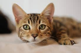 Antiviral Drug Used to Treat Cats May Also Work Against Covid-19, Say Scientists