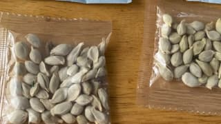 People in US & Canada Are Receiving 'Mystery Seeds' From China, Is it Another Chinese Conspiracy or a 'Brushing Scam'?