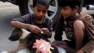 'Real Kings of India': 2 Boys Put Band-Aids on Injured Puppy, Heartwarming Picture Wins People's Hearts