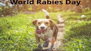 World Rabies Day 2020: Did You Know Rabies Caused More Death in India in The Last 5 Years Than Novel Coronavirus?