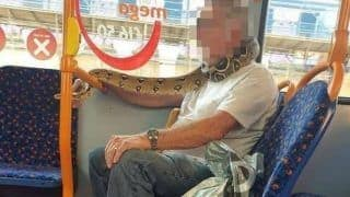 WHAT? Bus Passenger Uses Pet Python as 'Face Mask', Wraps It Around His Neck & Mouth