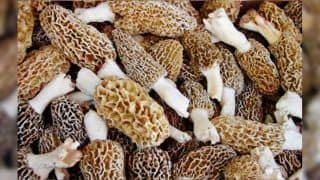 This Rare Indian Mushroom Costs Rs 30,000 Per Kg And is Grown in The Himalayas - Know Everything