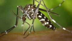 Cat Que Virus: चीन में नए वायरस की आहट, ICMR ने जारी की चेतावनी, जानें अब ये क्या बला है?