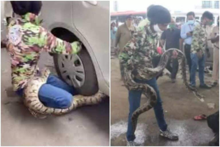 Watch | Rock Python Caught Under The Wheels of a Car in Mumbai, Rescue Video Goes Viral