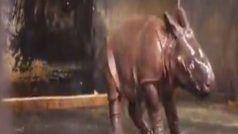 Viral Video: बारिश में नहाते हुए मस्त हुआ बेबी गैंडा, किया ऐसा डांस, देख हो जाएंगे फैन...