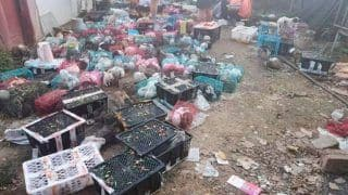 The Horror: 4000 Pets Including Cats, Dogs & Rabbits Bought Online Found Dead in Boxes in China