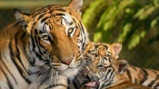 Assam BJP Leader Demands Beef Ban For Zoo Animals, Protests Outside Guwahati Zoo
