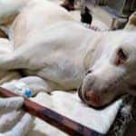 Mumbai Shocker: Female Dog Sexually Assaulted in Powai, 11-Inch Stick Inserted Into Her Private Part