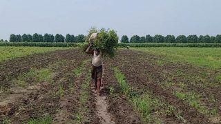 राजस्थान सरकार के 3 कृषि संशोधन बिल, किसान उत्पीड़न पर 3 से 7 साल की कैद, 5 लाख का जुर्माना