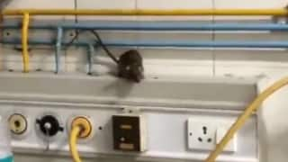 Watch: Video of Rats Running Around Inside ICU of Tamil Nadu Govt Hospital Goes Viral