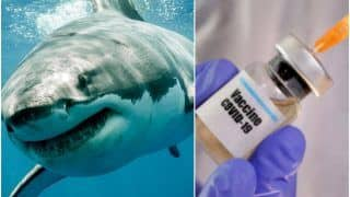'How Selfish Are Humans': Petition Filed After Decision to Kill 5 Lakh Sharks For Covid-19 Vaccine Horrifies The Internet