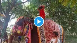 Video: योगगुरु बाबा रामदेव हाथी की पीठ पर योग करते हुए अचानक नीचे गिरे