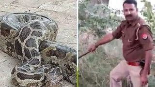 This UP Inspector Catches Snakes & Pythons Too, Says He's Been Never Afraid of Reptiles
